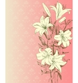 Drawn lily on pink background vector image