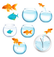 Fish and aquariums vector image