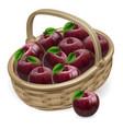 red apple basket vector image