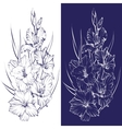 floral blooming gladiolus hand drawn vector image
