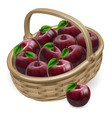 red apple basket vector image