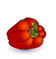 Sweet pepper isolated on a white background vector image