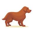 cartoon dog isolated vector image vector image