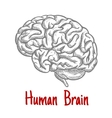 Isolated human brain engraving sketch vector image vector image