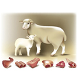 Sheep lamb and mutton vector image vector image