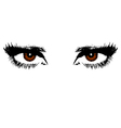 Womens brown eyes vector image