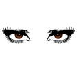 Womens brown eyes vector image