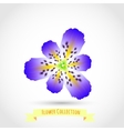 Colorful Spring Flower Isolated on White vector image vector image