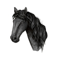 Horse head sketch of black arabian stallion vector image vector image