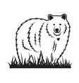 Bear on the grass vector image