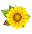Sunflower with ladybird vector image