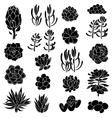 Isolated black silhouettes of succulents vector image