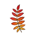 Beautiful red colored autumn rowan leave isolated vector image