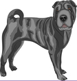 sharpei vector image