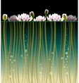 Water lilly and bubbles vector image