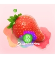 Strawberry watercolor vector image vector image