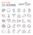 set of line icons of anatomy and physiology vector image