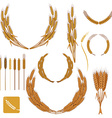 Set of wheat wreath and design elements vector image
