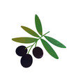 colored isolated icon of branch with black olives vector image