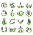 Ear wheat isolated vector image