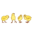 Hand drawn colored sketch of 4 easter chicks vector image
