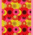 seamless pattern colorful gerbera flowers vector image