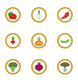 vegetables from the garden icons set vector image