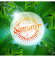 tropical plants and sunlight vector image