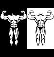 male athletic body and muscules silhouettes vector image
