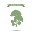 Ginkgo biloba stylizes leaves Silhouette of vector image
