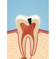Tooth sheme icon vector image vector image
