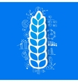 drawing business formulas ears of wheat vector image