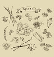 background with hand drawn spices vector image