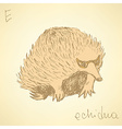 Sketch cute echidna in vintage style vector image