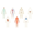Set of human organs and systems vector image