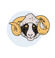 funny smiling ram face vector image