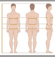 men body measurements vector image