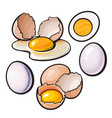 whole and cracked broken shell chicken egg vector image vector image
