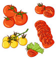 set of tomatoes on white background vector image