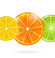Citrius Fruit Slices vector image vector image