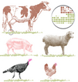livestock vector image vector image