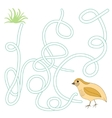 Game labyrinth find a way quail vector image