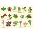 Kitchen condiment herbs and spices vector image vector image