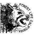 bear graphic with forest vector image