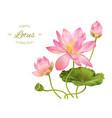 Lotus realistic vector image