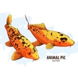 Orange Koi fishes vector image vector image