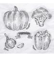 Vegetables pepper pumpkin garlic broccoli vintage vector image vector image