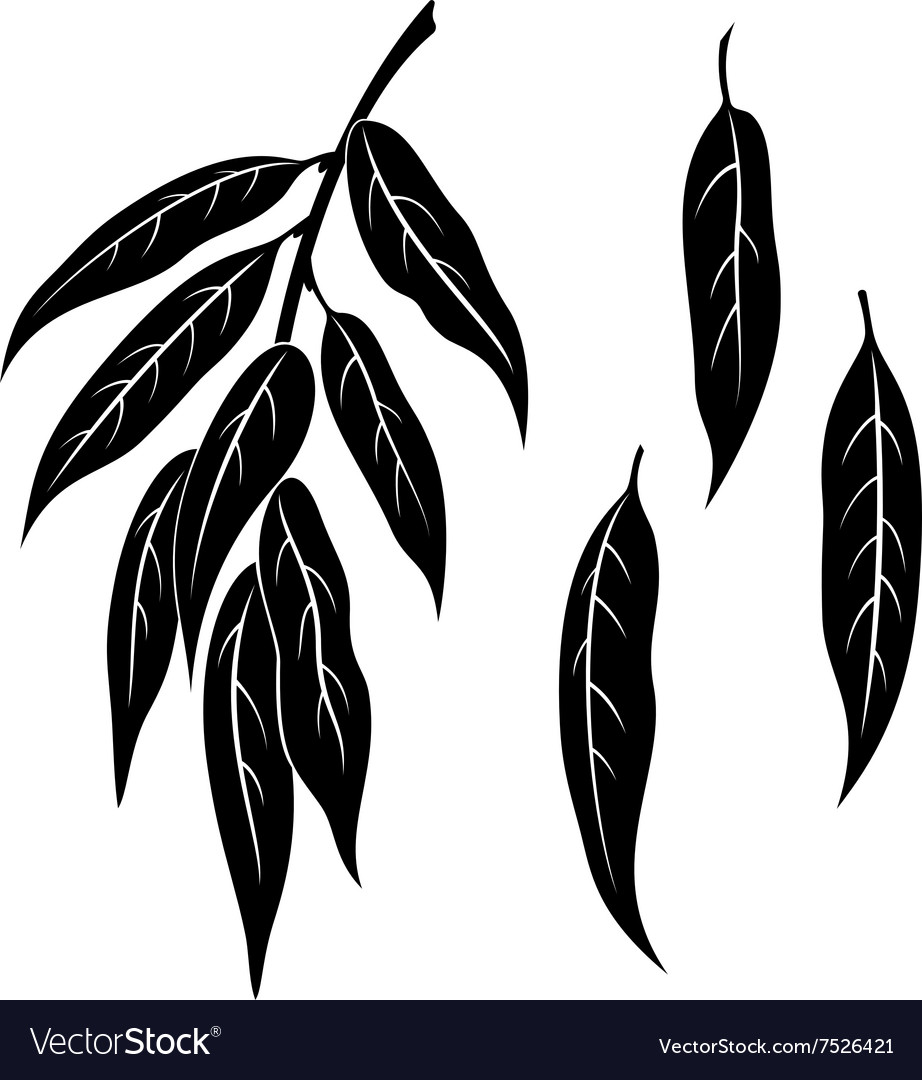 Willow leaves pictogram set vector