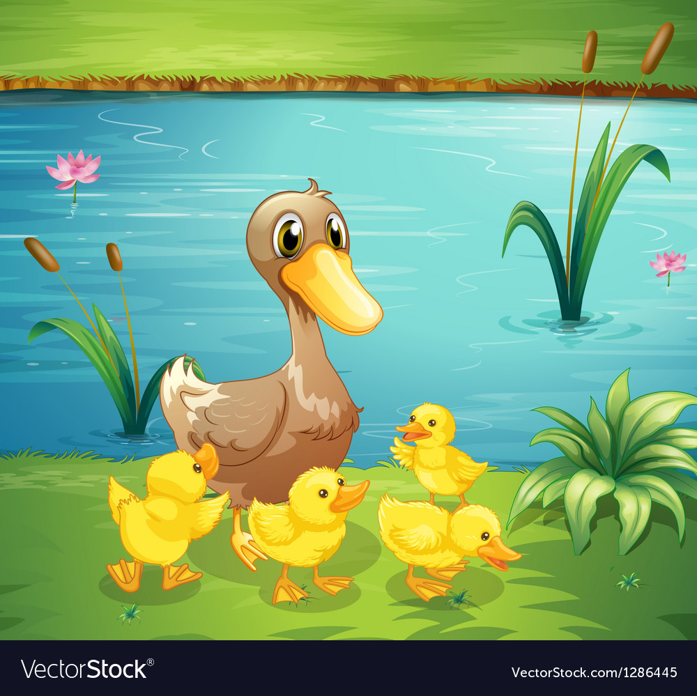 A mother duck with her ducklings in the river vector