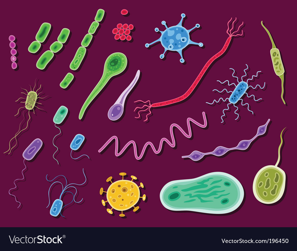 Bacteria and viruses vector